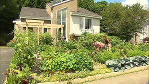 canadian couple fights to keep vegetable garden urban plantscapes