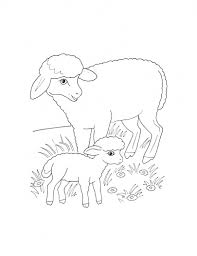free coloring pages baby birds nest sheep mother lamb