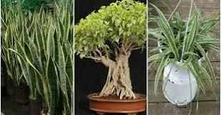 plantes dans une chambre 3 plantes qui génèrent de l oxygène même la nuit obtenez un pour