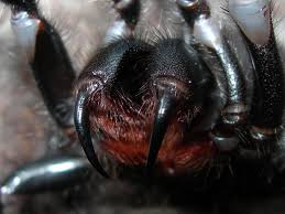 spiders facts at spiderzrule the best site in the world about