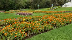 best places to see spring flowers in san francisco cbs san francisco