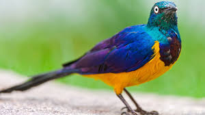 index of data images wallpapers animals and birds