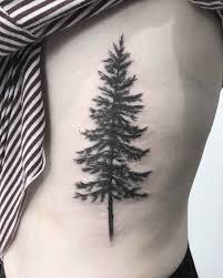 pine tree best ideas gallery