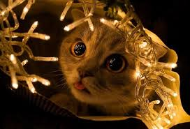 cat christmas 10 cats that christmas magic in their