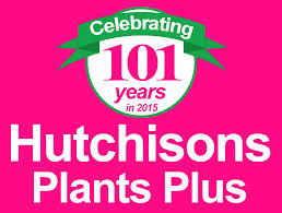 top 10 hedges u2013 syzygium lilly pilly u2013 hutchisons naracoorte