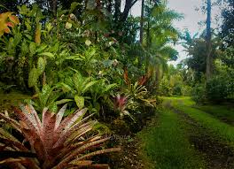 Hawaiian Flowers And Plants - download tropical plants hawaii solidaria garden