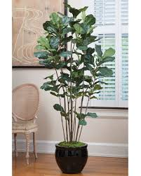 affordably priced 6 fiddle leaf fig silk tree at petals