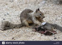 Dead Squirrel Meme - list of synonyms and antonyms of the word dead squirrel