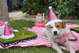 dog birthday party briar lola grover s doggie birthday party the sweetest occasion