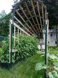 chayote plants with trellis in the garden growing chayote plants