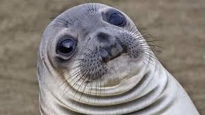 Awkward Seal Meme - awkward moment seal know your meme