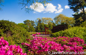 Brooklyn Botanic Gardens by The Brooklyn Botanic Garden Is Beautiful Photos Videos