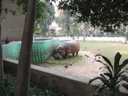 belgian shepherd for sale in pakistan file hippo lahore zoo pakistan jpg dogs pinterest zoos and dog