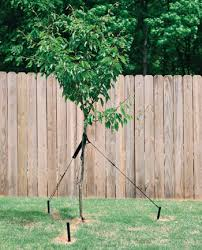 tree stakes hummert international