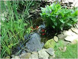 small garden fish pond designs make small garden fish pond