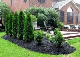 Backyard Privacy Trees Landscaping Ideas For Backyard Privacy Solidaria Garden