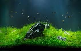 Aquascape Maintenance Feng Shui Minimal Freshwater Tank Luxury Aquarium Fishtank
