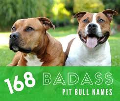 american pit bull terrier brindle badass pit bull names for males and females pethelpful