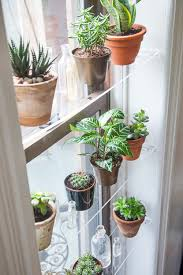 Low Light Succulents by Diy Floating Window Shelves Design Sponge Window Shelves