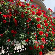 aliexpress buy cheap 200pcs bag ornamental plant creepers