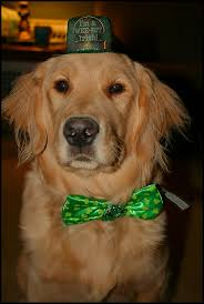 these 5 dogs love st patrick u0027s day how about you