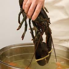 cuisiner un homard comment cuire le homard trucs et conseils cuisine et nutrition