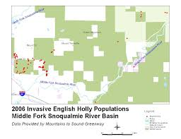 Map Of Counties In Washington State by English Holly Identification And Control Ilex Aquifolium King