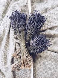 250 stems lavender one bunch preserved dry english dry