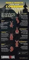 442 best bugs images on pinterest pest control animals and