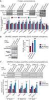 proteasome inhibition alleviates snare dependent neurodegeneration
