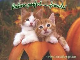 pet halloween background friendship day wallpapers free