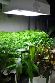 Fluorescent Light For Plants Leaf Surface Temperature With Hps Mh Cfl And Led Grow Lights