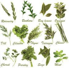 herb chart pruning herb chart google search gardening pinterest