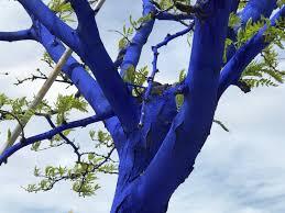 denver exhibit turns trees blue for environmental awareness