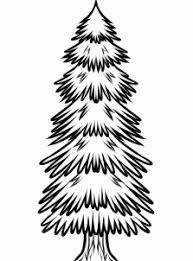 pine tree coloring pages how to draw how to draw a spruce tree hellokids com