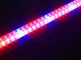 t5 vs led grow lights 7 best led grow lights images on pinterest led grow lights color