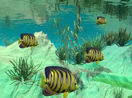 freshwater fish freshwater fish backgrounds wallpaper wallpaper hd background