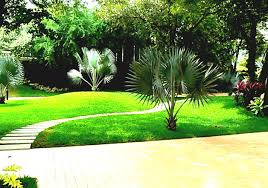 Planting Ideas For Small Gardens by Garden Landscaping India Landscape Ideas For Small Gardens Design