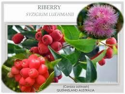 imagenes que empiecen con la letra am papábeto y cucú 18 frutas adicionamos frutas que inician con las