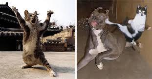 Sneaky Cat Meme - 21 sneaky cats acting just like ninjas