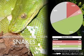 Madagascar Blind Snake Chart The World U0027s Most Endangered Snakes