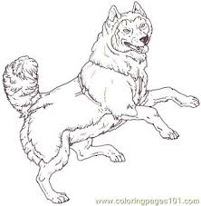 mammals coloring pages 12 best stencils images on pinterest stencils husky and