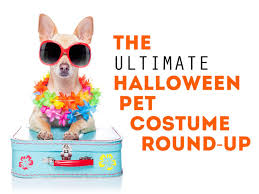 master splinter halloween costume diy pet halloween costume ideas hgtv u0027s decorating u0026 design blog