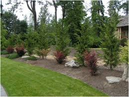 Best Trees For Backyard by Backyards Charming Leyland Cypress Landscape Ideas Placed As A
