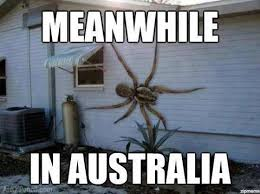 Spider Meme - fake photo alert giant spider on the side of a house