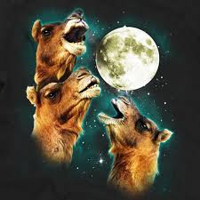 3 camel moon three wolf moon charm city tees