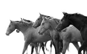 tony stromberg equine photography buy books u0026 prints tony