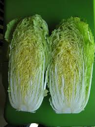 cabbage china cabbage comes in all sizes osborne seed company variety trials