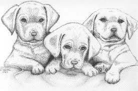 pictures pencil art gallery drawings drawing art gallery