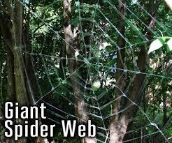 spider u0026 webs